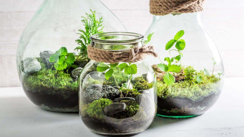 Use terrariums