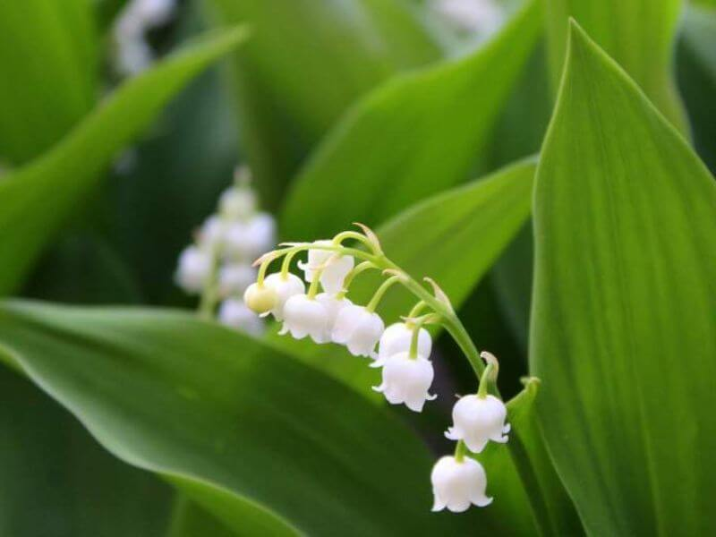 Lily of the Valley Wedding Flower Ideas
